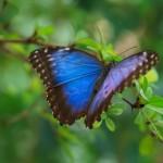 Psicología cambio: mariposa