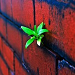 plant-on-the-brick-wall