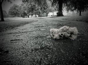 Crisis - Oso de peluche perdido en la calle