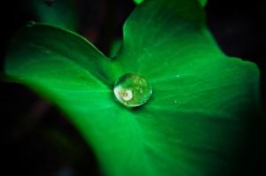 Gotade agua sobre hoja verde